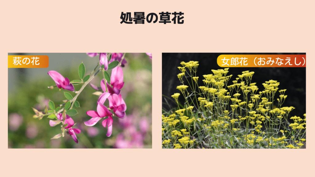 処暑の草花