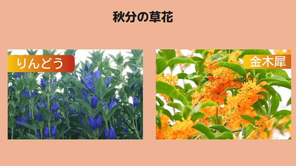 秋分の草花