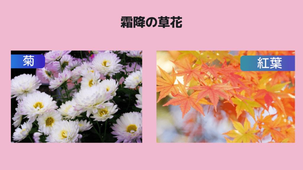 霜降の草花菊紅葉