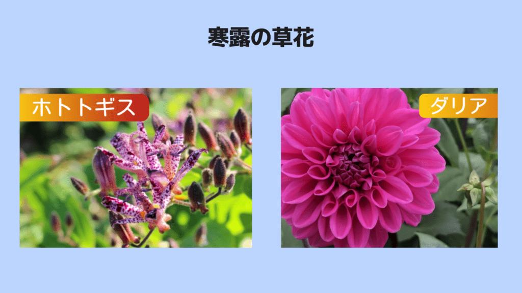 寒露の草花